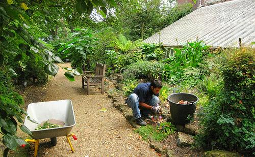 El jard n chelsea un jard n bot nico especial for Jardin botanico medicinal