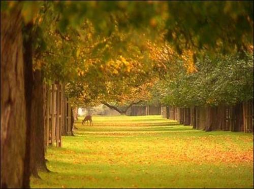 El parque bushy en el distrito de richmond - Fotos bonitas de otono ...