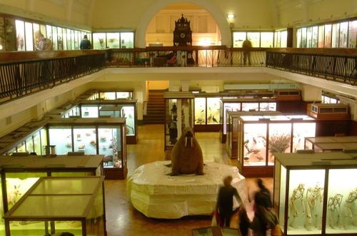 Museo Horniman